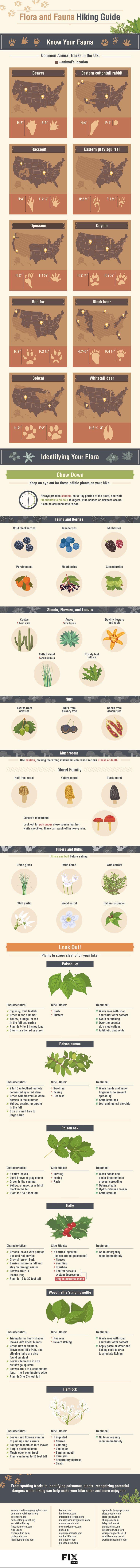 134 best Outdoor Activities images on Pinterest