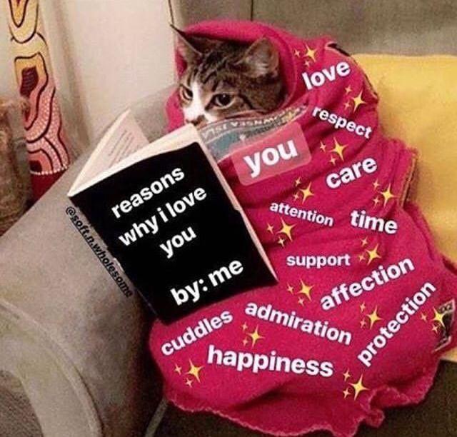 Louis Tomlinson On Twitter Love Memes Cute Memes Memes For Him