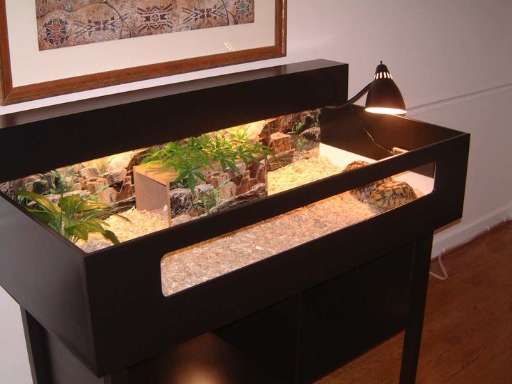 Tortoise Table Cage Ideas Torto