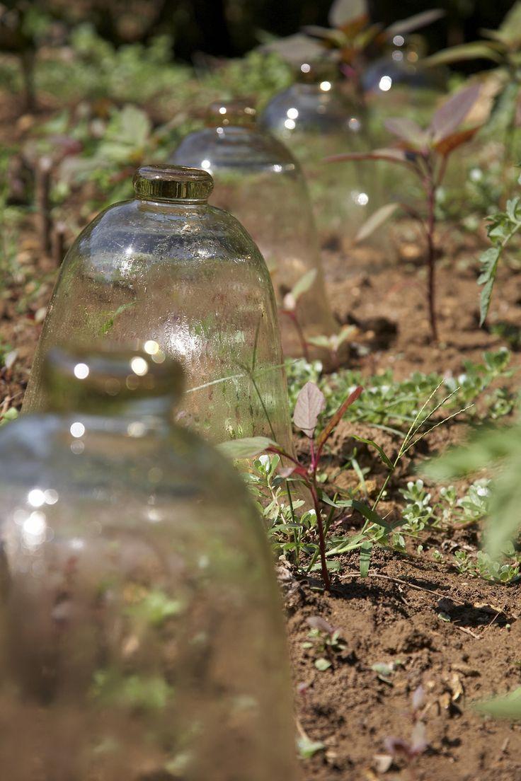Die eigenen Melonen im Garten • Pflanzen Tipps & Tricks • 99Roots.com