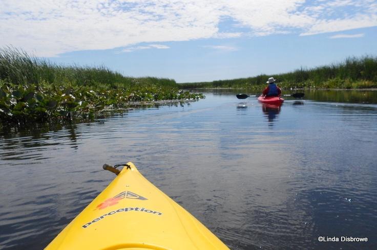 Kayaking in Point Pelee National Park