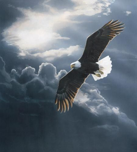free soaring eagle pictures - Yahoo Image Search Results