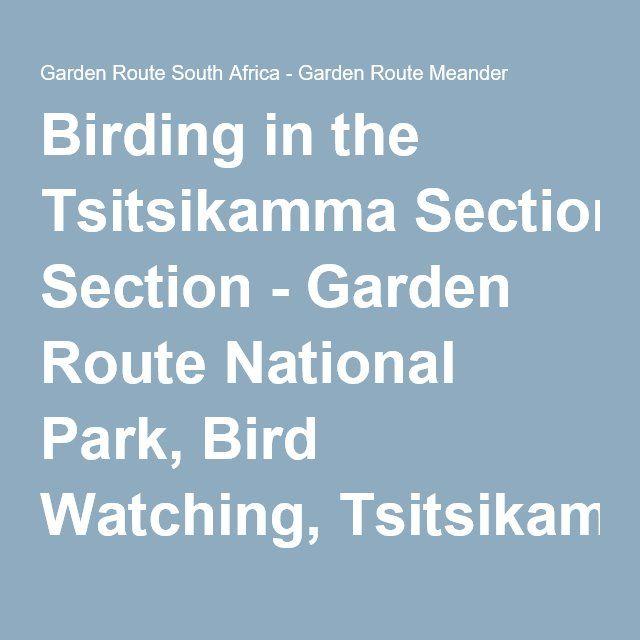 Birding in the Tsitsikamma Section - Garden Route National Park, Bird Watching, Tsitsikamma National Park, Garden Route, South Africa