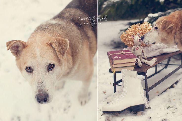 winter, snow, dog, csutafoto