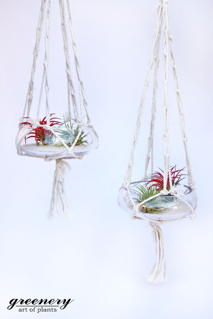 Air plants in hanging terrariums!