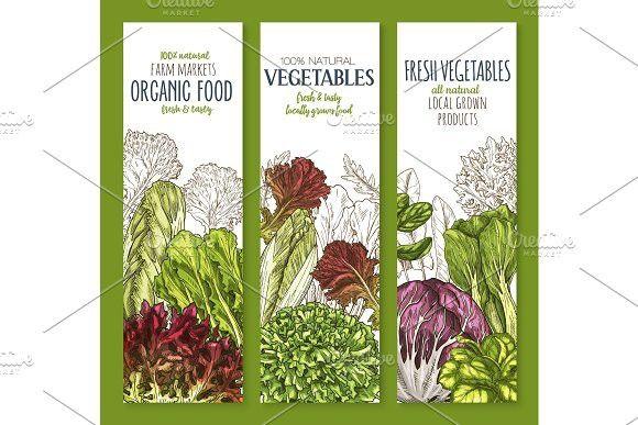 Leaf vegetable sketch banner set of salad greens #vegetable #salad