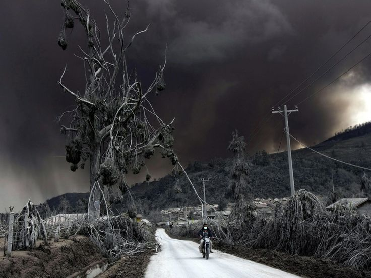 Damaged trees line a road in the deadly shadow of Mount Sinabung, the North Sumatran volcano that has forced thousands to flee their homes and seek shelter in public buildings