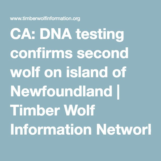 CA: DNA testing confirms second wolf on island of Newfoundland | Timber Wolf Information Network