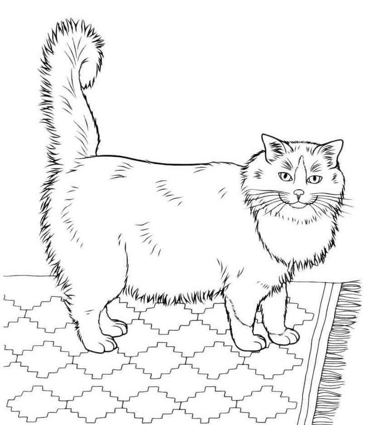 Раскраски кошек | Раскраски с животными, Рисунки для ...