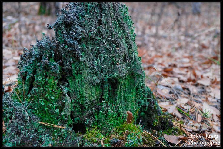 Life stump by EskelKreig on DeviantArt