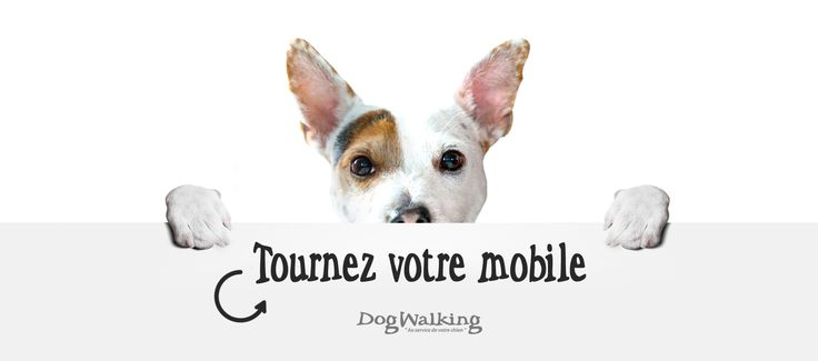 Consultez nos tarifs : promenade de quartier, balade en forêt, visite de chat, services vétérinaire, garde et pension canine sur Paris et sa banlieue
