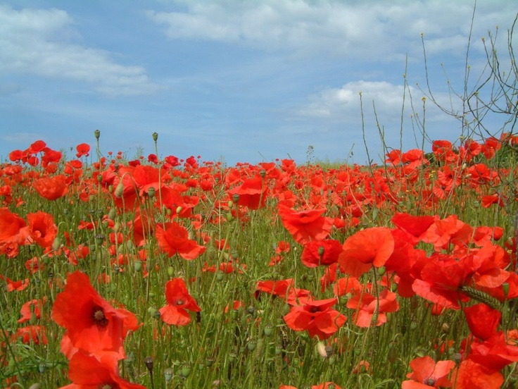 Happy Rememberance Day