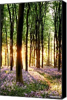 Bluebells In Sunrise Light Photograph by Simon Bratt Photography - Bluebells In Sunrise Light Fine Art Prints and Posters for Sale
