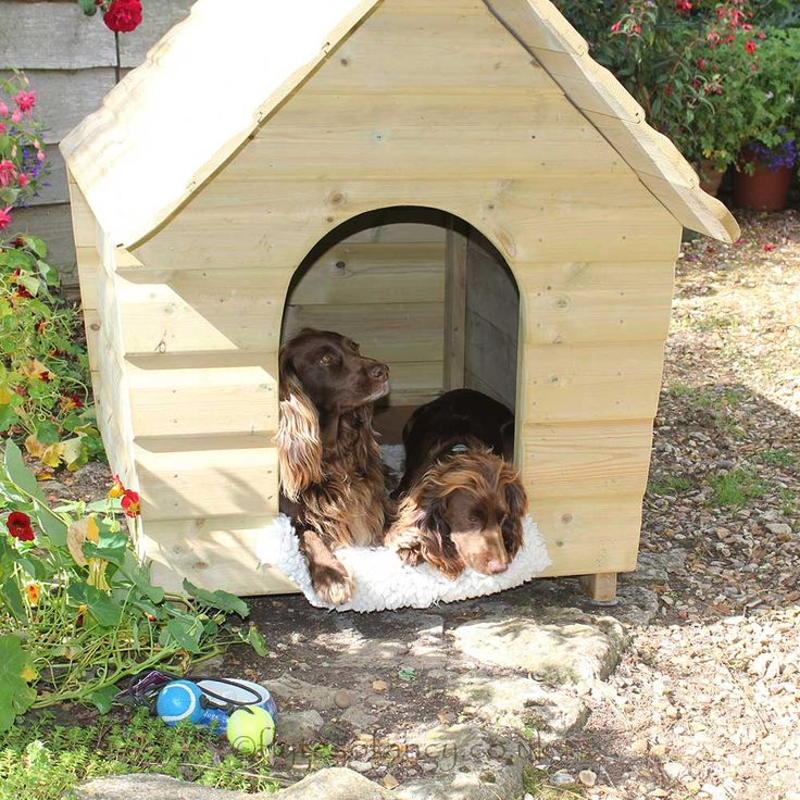 Largest Dog Crate Available Uk