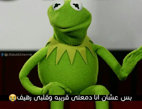 Funny Frog Cartoon Meme : 86 best كيرميت images on pinterest kermit arabic funny and arabic