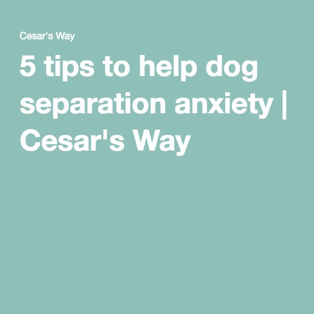 5 tips to help dog separation anxiety | Cesar's Way