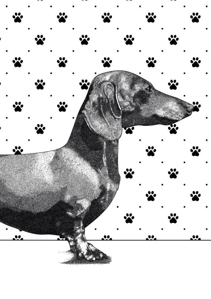dachshund print | animal print | black and white print | wall art | dog