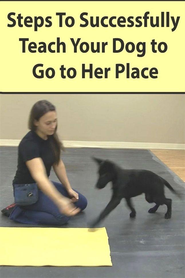 Dog Training German Commands Dog Training Wellington Fl Dog