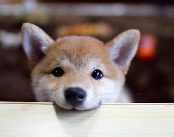 1000+ images about Really cute animals.. on Pinterest ...