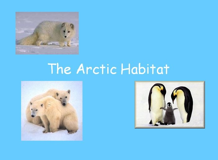 Arctic Habitat - Use this PowerPoint presentation on the Arctic to compare different habitats