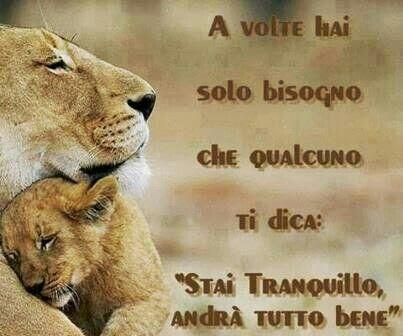 Tranquillità tra leoni