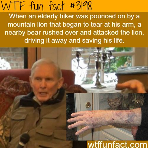 Bear saves the life of an elderly hiker -WTF fun facts