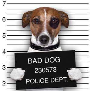Quadro con Cane  #dog #cane #baddog #art #canvas #quadro #quadri #abstract #madeinitaly #paintings #pictures #pintdecor #graphicollection