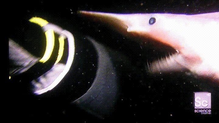 Así de estremecedora es la mordedura de un tiburón duende