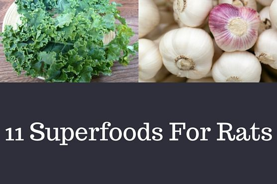 What are some of the superfoods your rats could benefit from in their diet? Here's our top 11 superfoods for rats.