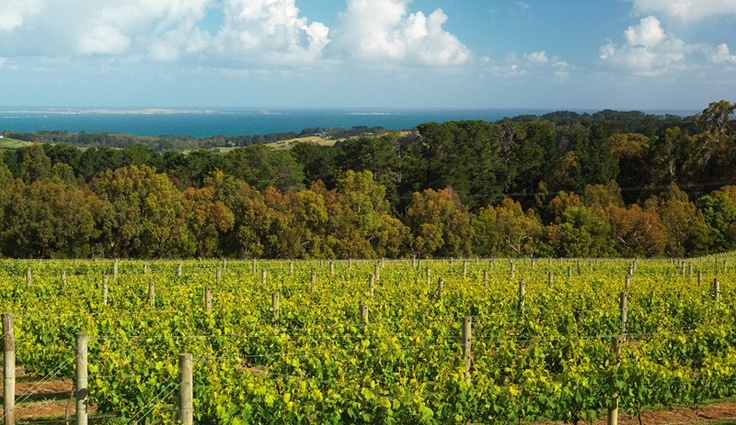 Imagine this stunning scenery whilst dining the finest local gourmet food and wine at award winning Red Hill Estate, Mornington Peninsula