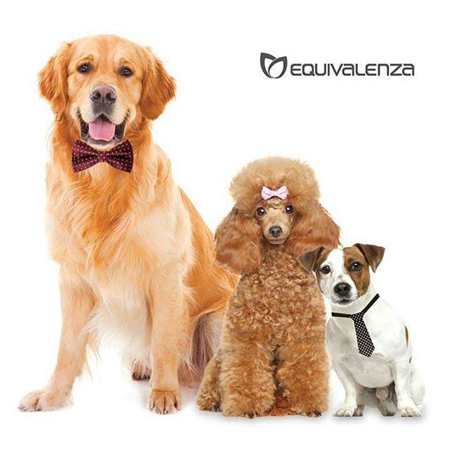 #Equivalenza pensa anche ai nostri #amici più #fedeli e per questo abbiamo 3 #profumi fantastici, venite con i vostri #cani per scoprire le #fragranze #perfume #pets #dog #padova #ig_padua #igerspadova #profumeria #youtubers #iblogger #onlyessenza #dogs
