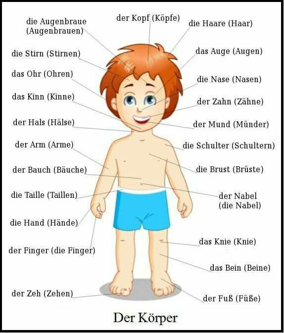 Arbeitsblätter Vorschule Mein Körper : Besten körper arzt krank sein bilder auf pinterest