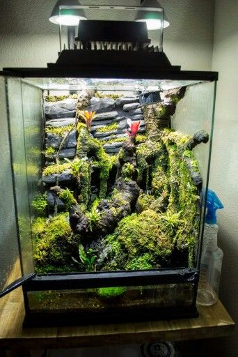 17 Best Ideas About Snake Terrarium On Pinterest Reptile
