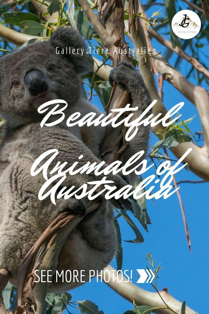 Sie sind nicht nur flauschig, sondern sie gehören zu Australien wie der Uluru, Koalas und Kängurus. Wir widmen ihnen eine ganze Foto-Galerie.