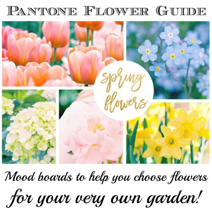 """I added """"Spring Flowers and Pantone Color Guide"""" to an #inlinkz linkup!http://www.myhumblehomeandgarden.com/#!Spring-Flowers-and-Pantone-Color-Guide/c1kw6/570971550cf27bf934a099ea"""