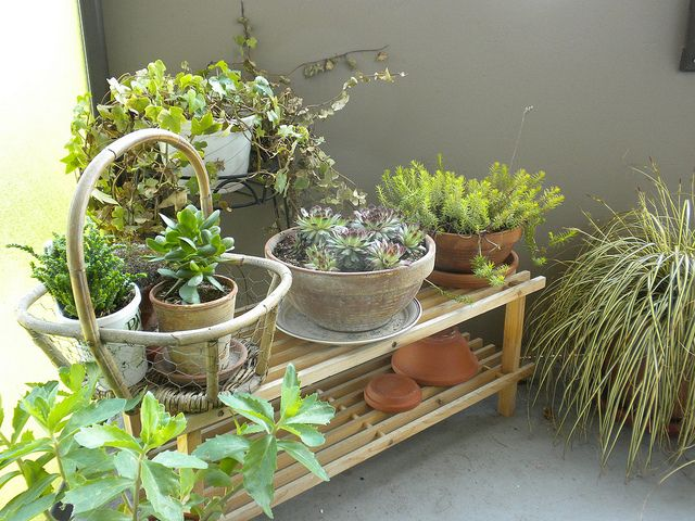 Repurpose A Shoe Rack Into A Great Place To Put Plants In Your Apartment  Balcony Garden