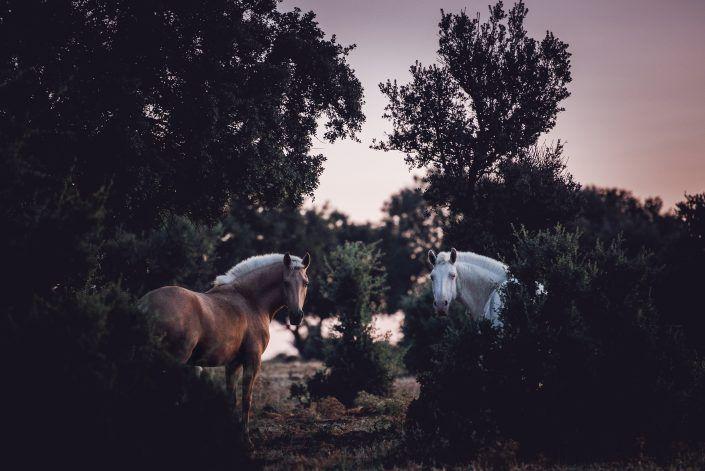 Fotos Pferde In Der Natur I In 2020 Schone Pferde Pferde