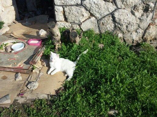Lovely white cat!