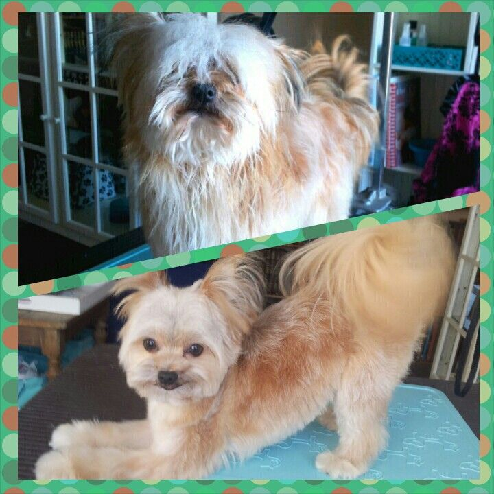 135 best images about before after dog grooming for A cut above grooming salon