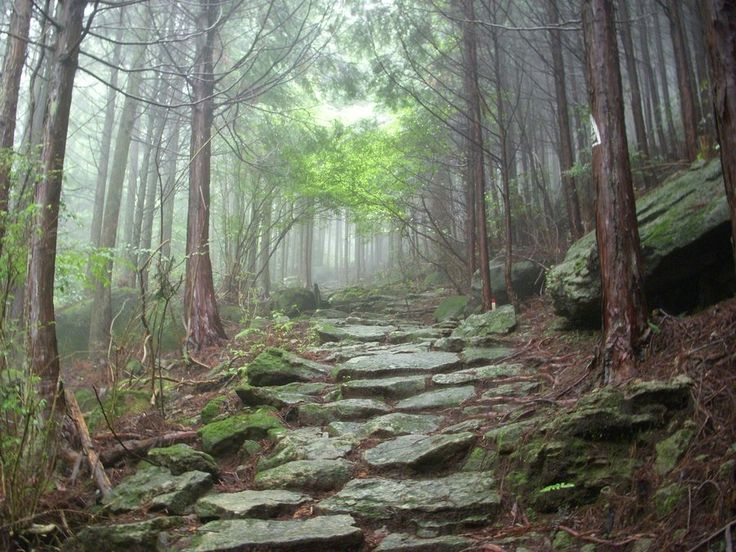 ancient_mountain_forest_stone_path_misty_by_omnimalevolent1-d4rlp4j.jpg (900×675)
