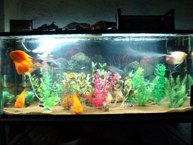 Best 25 peceras de agua dulce ideas on pinterest peces for Peces de agua dulce para peceras
