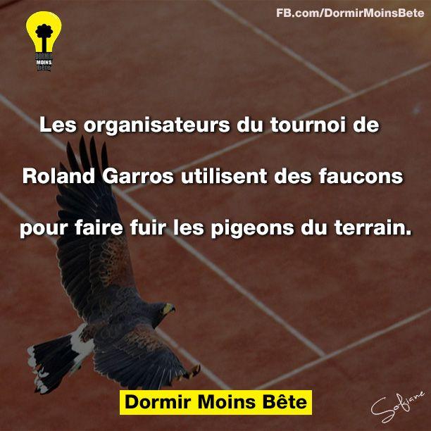 Les organisateurs du tournoi de Roland Garros utilisent des faucons pour faire fuir les pigeons du terrain.