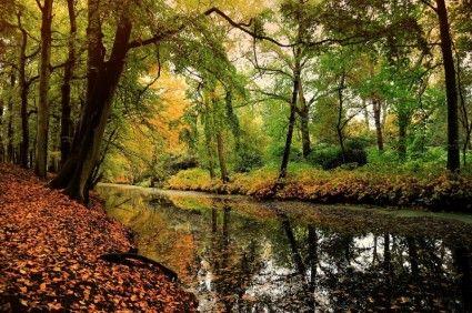 nature_leaf_deciduous_forest_235733.jpg (425×282)