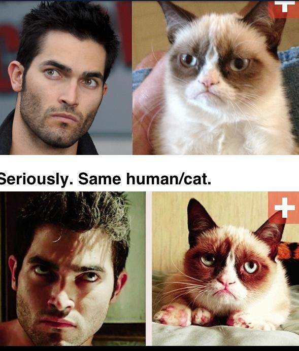 Tyler Hoechlin = The Grumpy Kitty