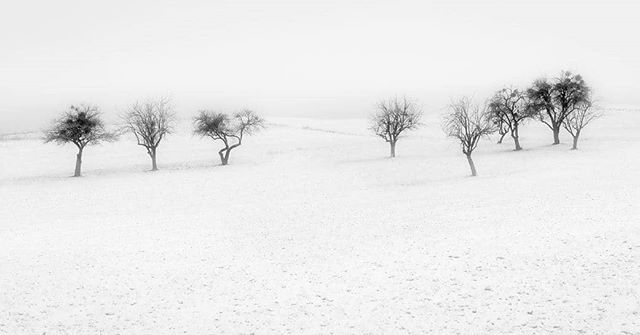 Lone trees. Contact me for original signed fine art prints in limited edition. #monochrome #landscape #winter #snow #pierrepichot #minimalism #fineart #print #trees #bnw_legit #bnw_planet #silvermag  #friendsinBnW #bnw_demand #bnw_rose #bnw_society #bnw_drama #bw_mania #igworldclub_bnw #bnwmood #amateurs_bnw #bnw_europe #bnwsouls #bw_perfect #top_bnw_photo #top_bnw #bnw_greatshots #bnw_magazine #bw_lover #bnw_life