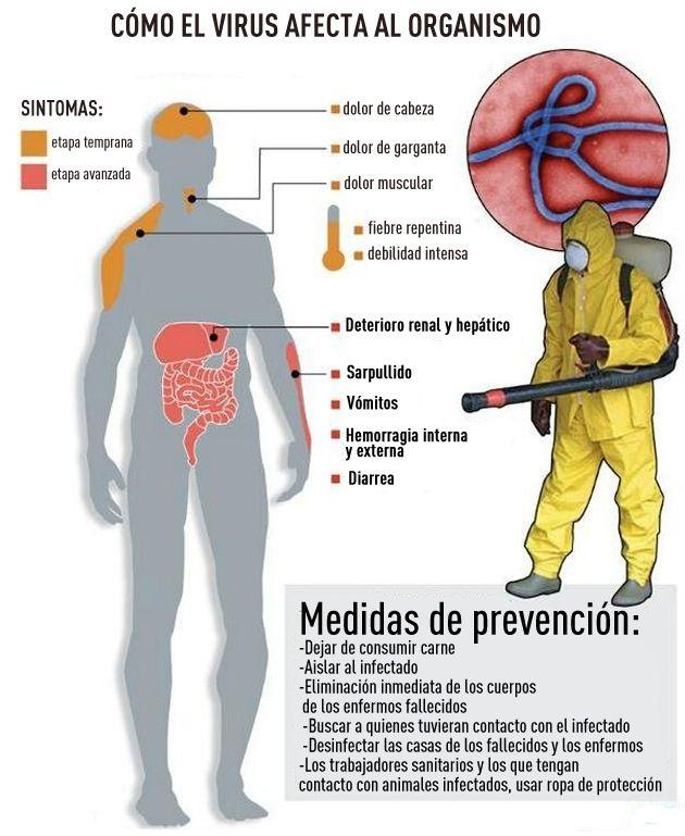 Infografía: Cómo el ébola destruye el organismo humano – RT
