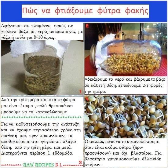 Πώς να φτιάξουμε Φύτρα φακής -από @Συνταγές Ωμοφαγίας