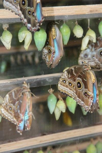 #Vlinders #butterfly