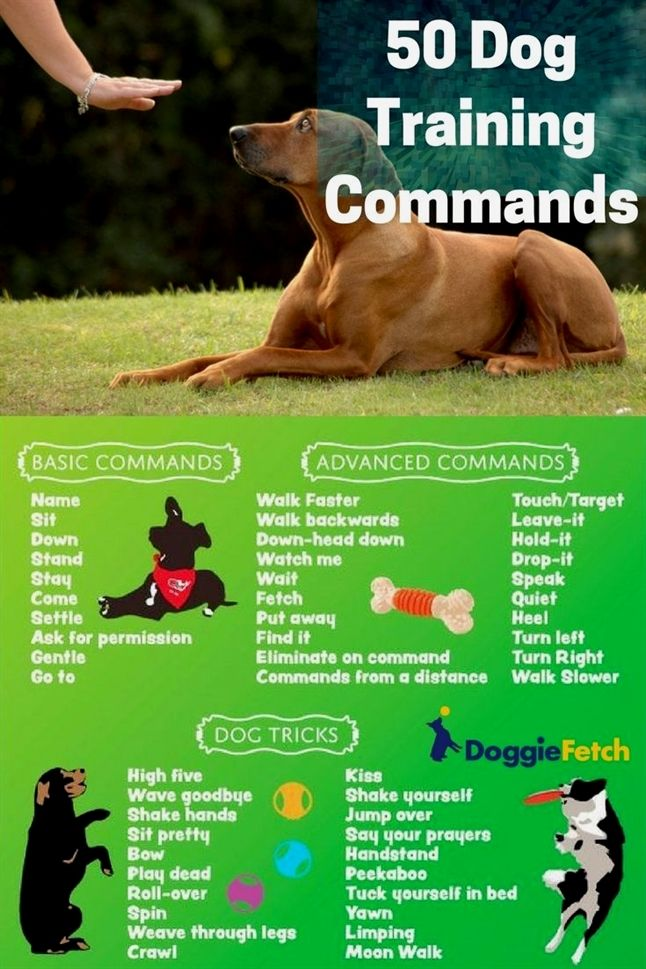 Your Dog Should Be Able To Respond To Your Commands Dog Training
