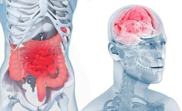 Vos intestins peuvent vous aider à lutter contre la dépression et l'hypertension Vos intestins abritent des milliards de bactéries qui influencent chaque jour l'homéostasie de votre corps. Loin d'ê…
